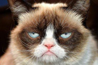 В Пскове исключили из церкви кота