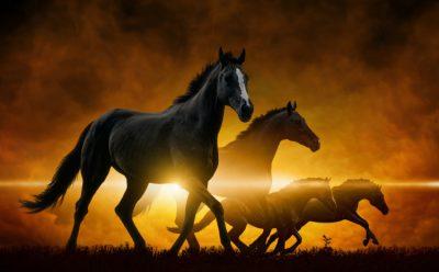 5 урок от ПА: КАК ЖИТЬ ДО ПРИШЕСТВИЯ (семь…)