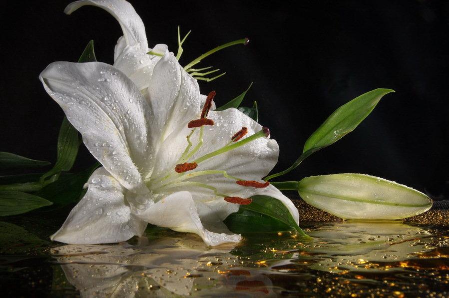 Лилия на болоте