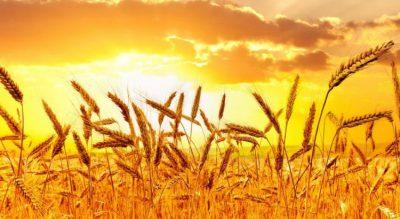 12 урок о благовестии от ПА: КАК В НАС РАСТЕТ ЦАРСТВО БОЖЬЕ